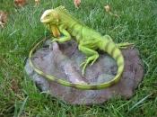 Iguana Verde 6