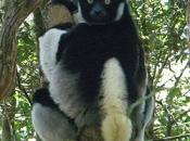 Indri4