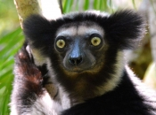 Indri5
