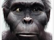 Kenyanthropus Platyops 1