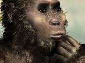 Kenyanthropus Platyops 2