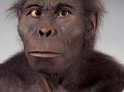 Kenyanthropus Platyops 3