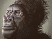 Kenyanthropus Platyops 4