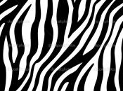 listras-da-zebra-1
