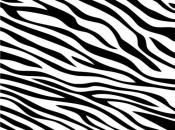 listras-da-zebra-2