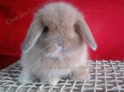 Mini Coelho Fuzzy 3