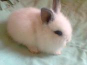 Mini Coelho Fuzzy 4