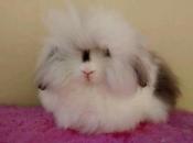 Mini Coelho Fuzzy 5