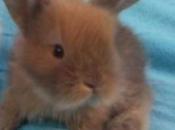 Mini Coelho Fuzzy 6