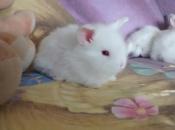 Mini Coelho Fuzzy 10