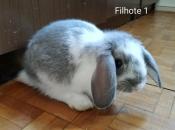 Mini Coelho Fuzzy 13