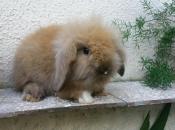 Mini Coelho Fuzzy 14