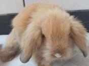 Mini Coelho Fuzzy 15