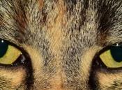 Olhos dos Felinos 2