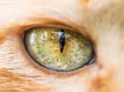 Olhos dos Felinos 3
