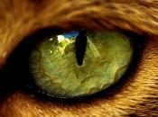Olhos dos Felinos 5