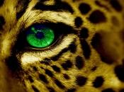Olhos dos Felinos 6