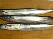 Peixe agulha 1