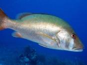 Peixe Namorado 2