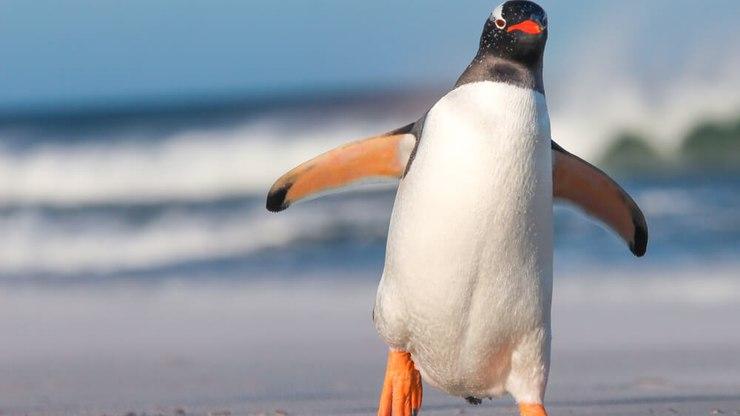 Pinguim 5