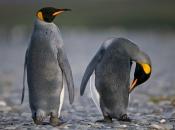 Pinguim 4