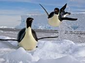Pinguim 6