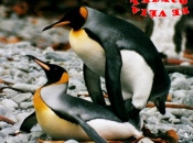Pinguins se Acasalando 2
