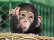 Primatas 1