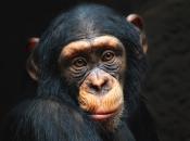 Primatas 4