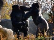 Primatas 5