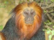 Primatas 6
