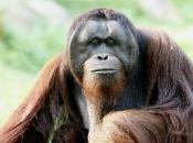Primatas 10