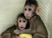 Primatas 12