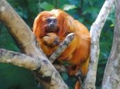 Primatas 9