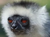 Primatas 14