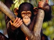 Primatas 18