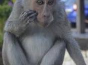 Primatas 2