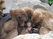Primatas 3
