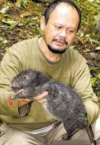Rato Gigante10