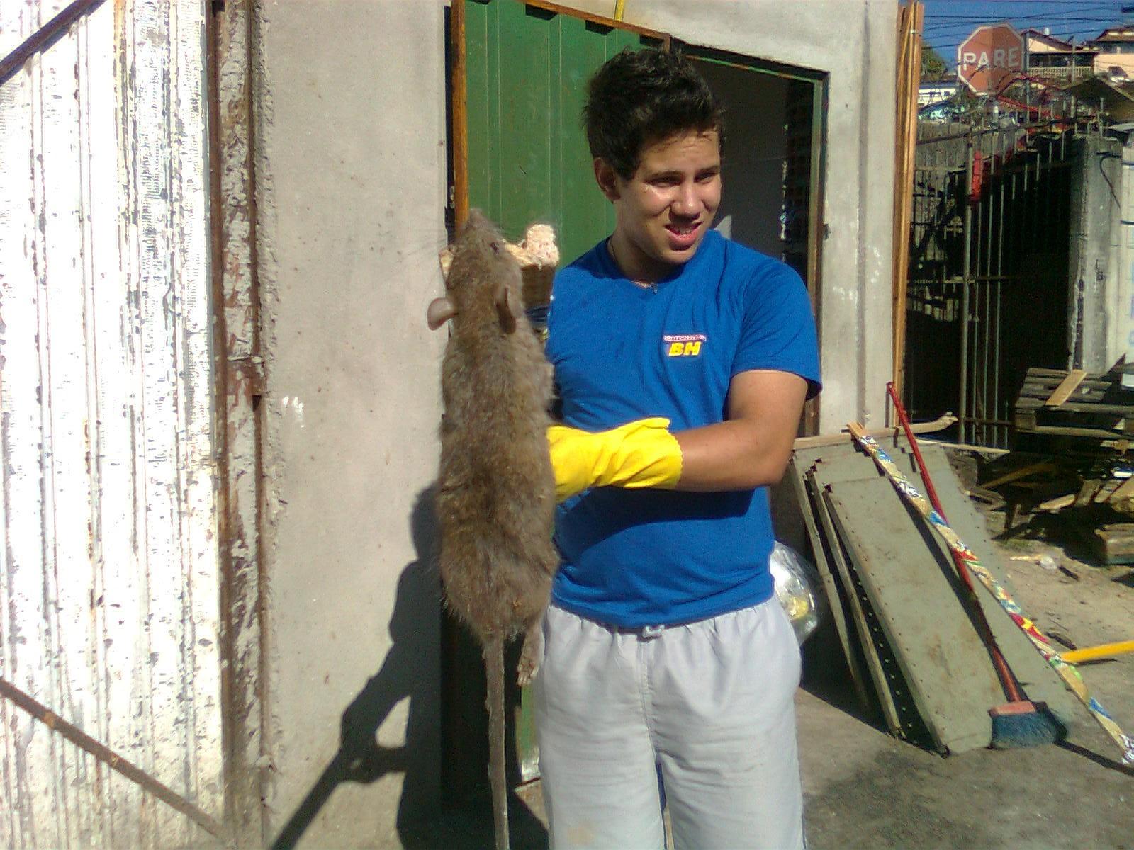 Rato Gigante16