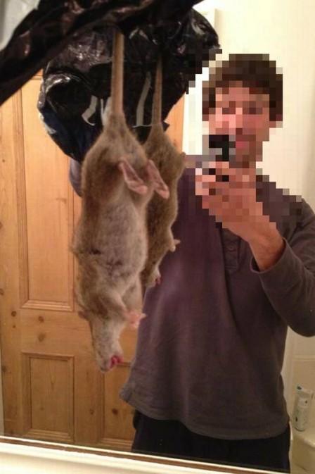 Rato Gigante17
