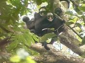 Reprodução dos Primatas 1