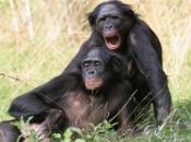 Reprodução dos Primatas 2