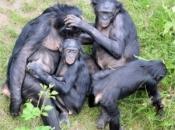 Reprodução dos Primatas 3