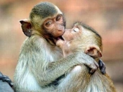 Reprodução dos Primatas 4