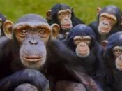 Reprodução dos Primatas 6