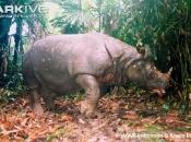 ARKive image GES009222 - Javan rhinoceros