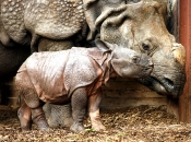 GERMANY-ANIMALS-ZOO-RHINOCEROS