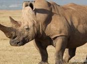 fotos-de-rinoceronte-1