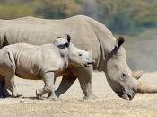 fotos-de-rinoceronte-10